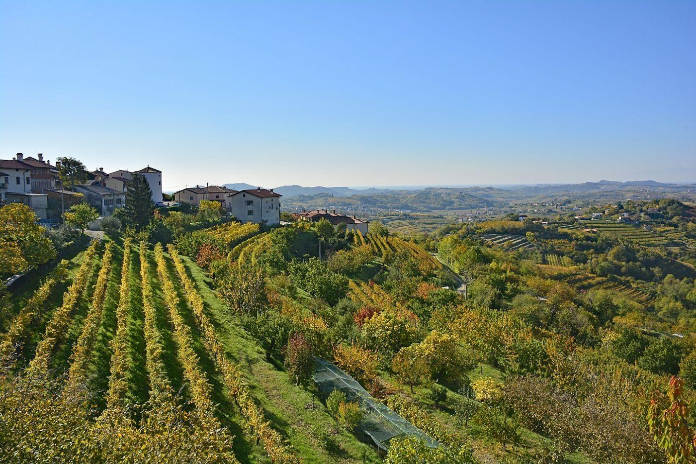 Vineyards near Šmartno